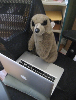 the meerkat at work