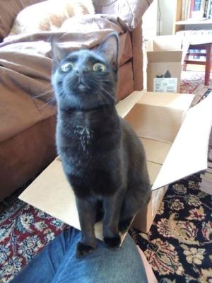 Castiel is Shocked