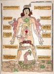 bloodletting-chart-1493-granger