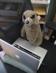 the meerkat at work